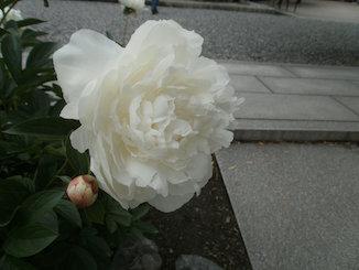 P5200069_s.jpg